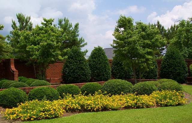 Landscaping for Accent tree for corner of house