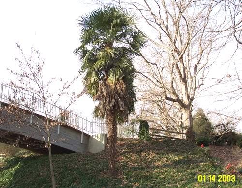 Sabal Palms  Lochaven Dr  Charleston SC Apartments for