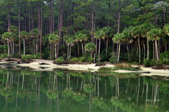 The Palms of Hunting Island, SC
